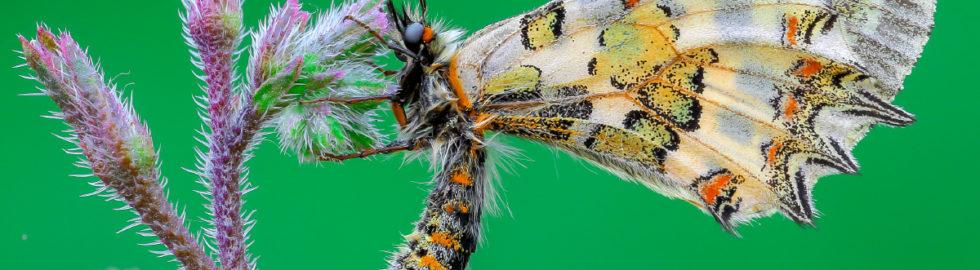 makro-çekim-teknikleri-kelebek-fotoğraf-çekimi-kelebek-makro-çekim