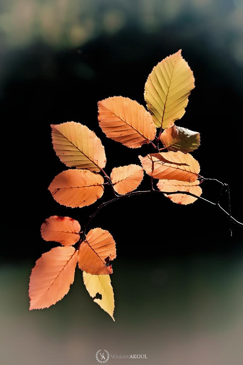 sonbahar-fotoğrafı-volkan-akgul