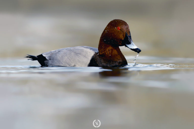 doğa-fotoğrafçısı,-wildphotographer,-kuş-fotoğrafçısı