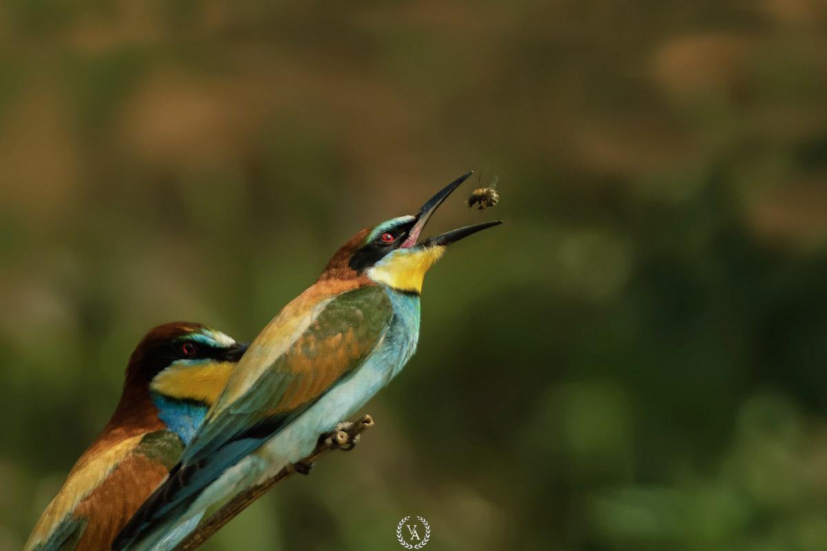 National-Geographic-fotoğraf-yarışması-prize-turkiye