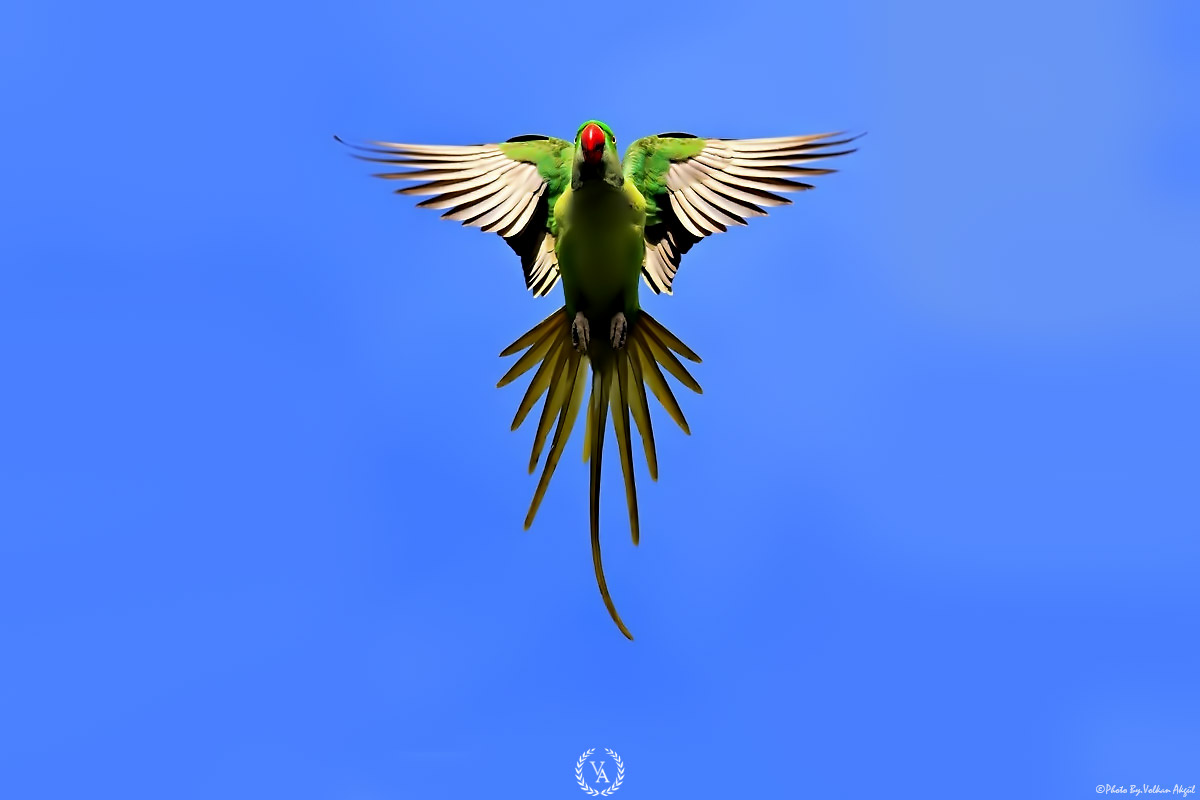 Canon flying birds volkan akgül