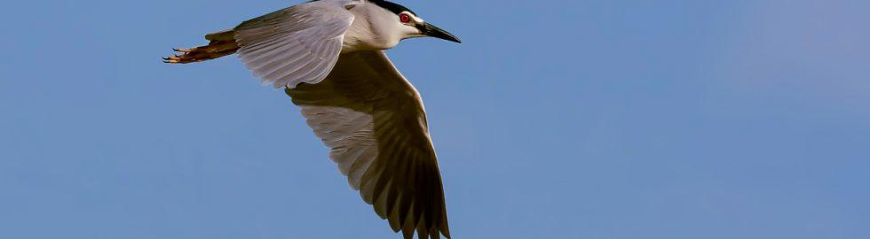 birds photo-12