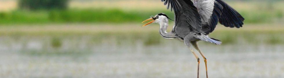 bird photos-19