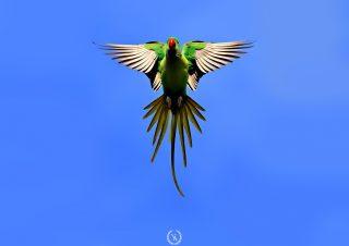 birds photo-9