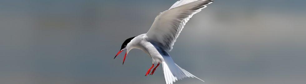 bird photos-11