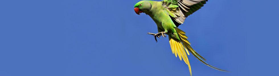 bird photos-14