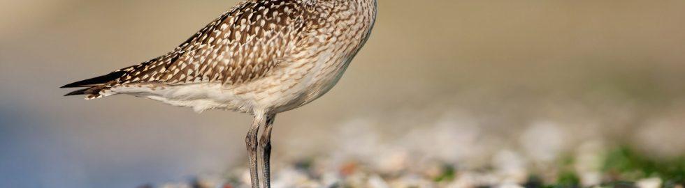 bird photos-24