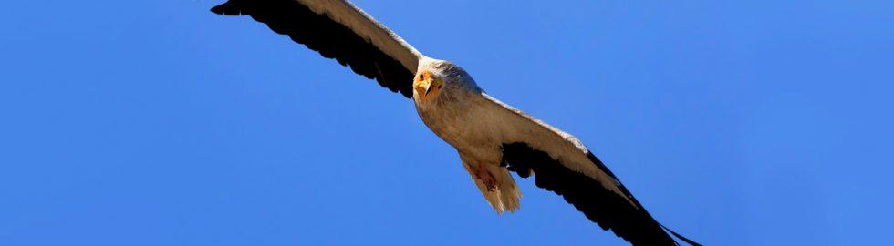 birds photo-2