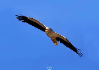 birds photo-6