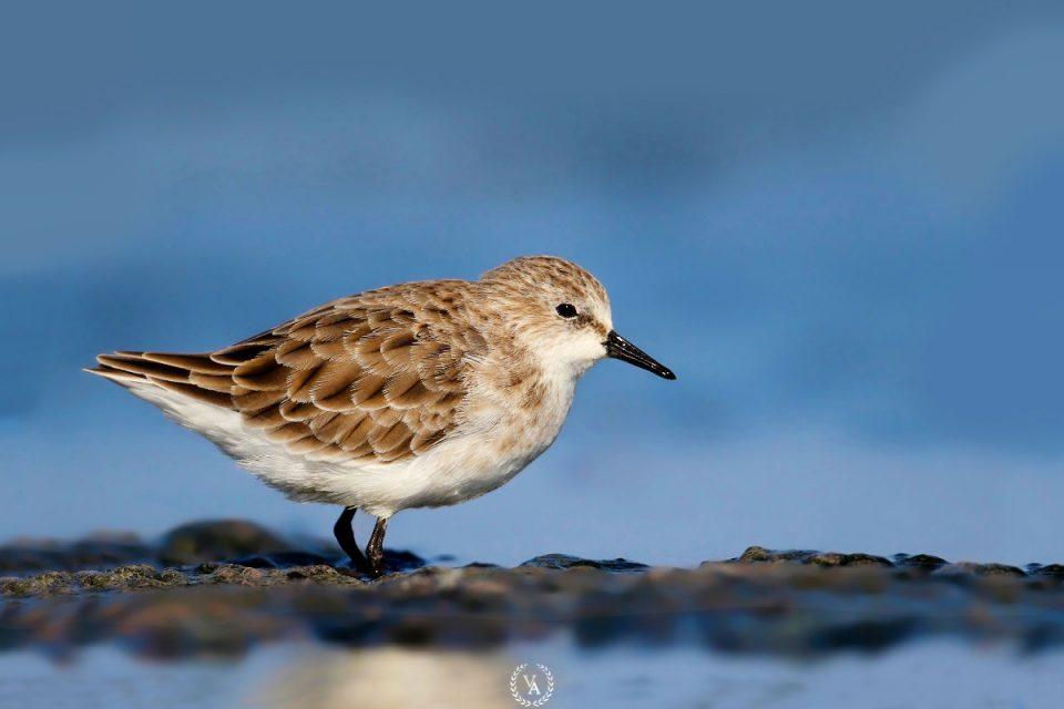 birds photo-5