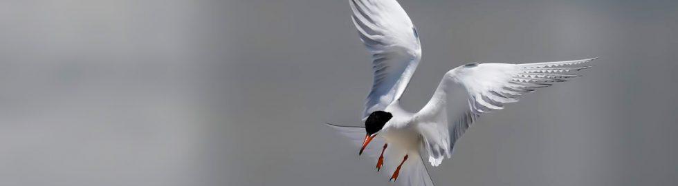 bird photos-22