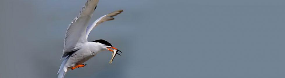 birds photo-11