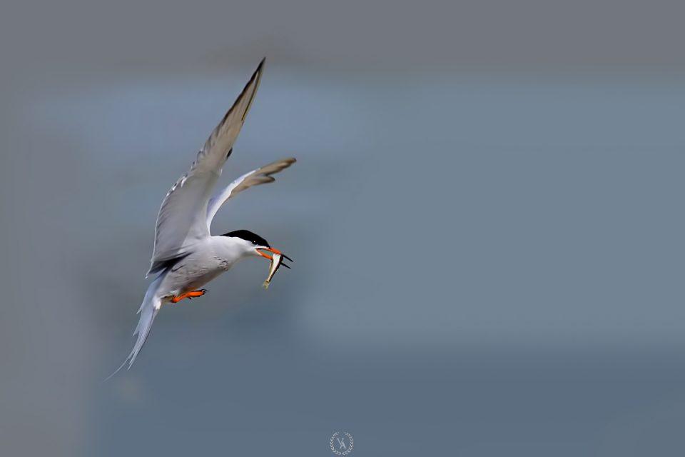 birds photo-10