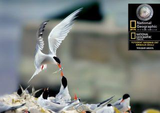 National-Geographic-fotoğraf-yarışması-ödüller-yarisma-birincilik