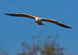 bird-photographer-bird-photos-kus-foto-marti
