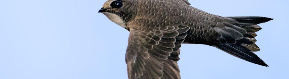 bird photos-10