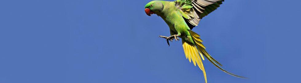 fly-bird-technic-canon-af-settings-yeşil-papagan