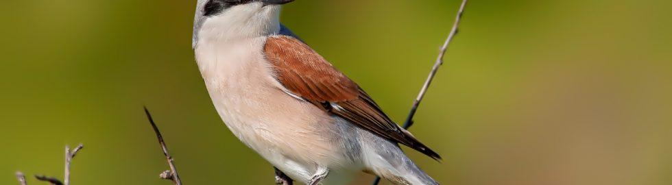 bird photos-6