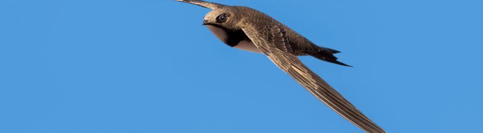bird photos-5