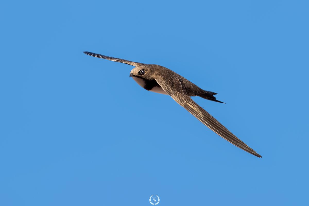canon fly birds
