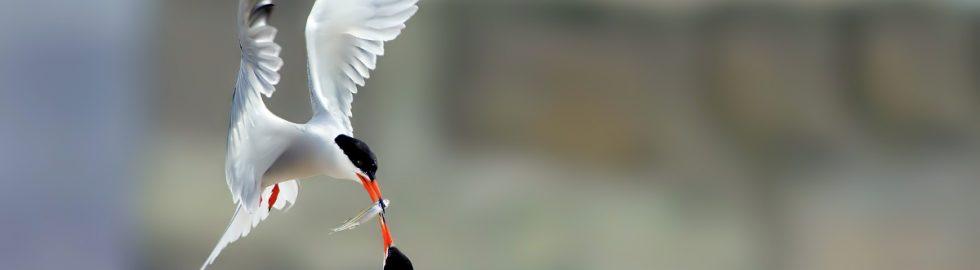 the love is share the best birds photos canon 1dxııı settings nikond6 af setting