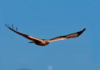 bird-photographer-volkanakgul