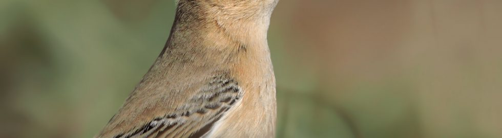doga-fotograflari-kuş-fotoğrafçılığı-kuş-fotoğrafı-çekim-teknikleri-canon-eos