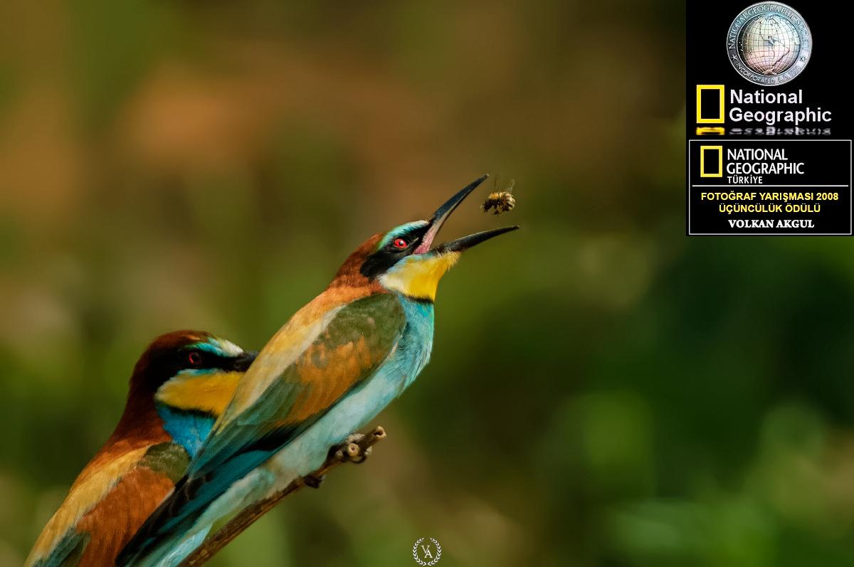 Nationel Geographic Fotoğraf Yarışması Türkiye Birincisi